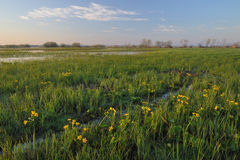Biebrza Marshes. And floodwaters in spring royalty free stock photos