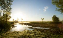 Biebrza nationalpark i morgonen Arkivfoto