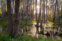 Biebrza swamps Royalty Free Stock Image
