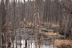 BIEBRZA SWAMPS Stock Images
