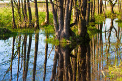 Biebrza swamps Royalty Free Stock Photos