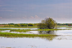 Biebrza swamps Royalty Free Stock Photography