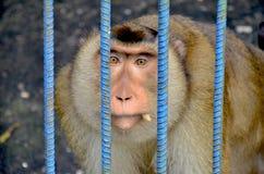 Biedne małpy łapać w pułapkę w klatkach przy zoo zdjęcia royalty free