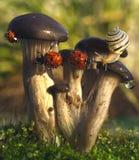 Biedronka w dewdrops Fotografia Stock