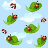 Biedronki komarnica na liściu Obrazy Royalty Free