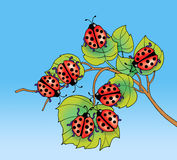 Biedronki na liściach Obrazy Royalty Free