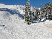 bieg narta Zdjęcie Royalty Free