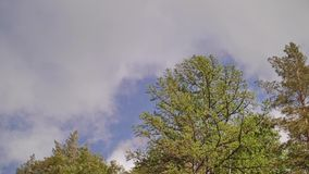 Biegać chmury i drzewa przeciw niebu dziwaczny góra krajobraz zbiory wideo