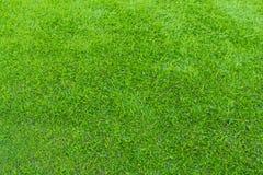 biegałam park Greensward boiska piłkarskiego tła zieleni pole Zdjęcie Stock