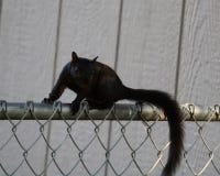 Biegać ogrodzenie Zdjęcie Royalty Free