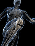 Biegacz anatomia Zdjęcie Royalty Free