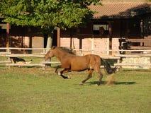 biegnij koń. Zdjęcia Stock