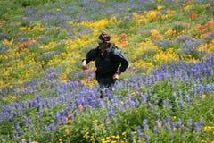 biegnij meadow Zdjęcia Stock