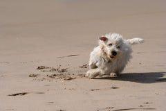 biegnij psa Obrazy Royalty Free