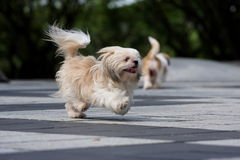biegnij psa obraz stock