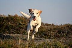 biegnij szczęśliwy Zdjęcie Royalty Free