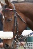 Biegowa końska głowa przygotowywająca bieg obrazy royalty free
