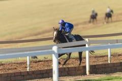 Biegowego konia jeźdza szkolenie Fotografia Royalty Free