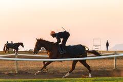 Biegowi konie Trenuje świt Obrazy Royalty Free