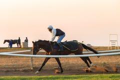 Biegowi konie Trenuje świt Zdjęcie Stock