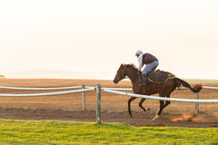 Biegowi konie Trenuje świt Fotografia Royalty Free