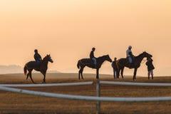 Biegowi konie Trenuje świt Obraz Royalty Free