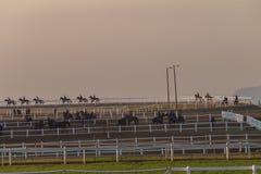 Biegowi konie Trenuje świt Zdjęcia Royalty Free
