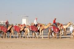 Biegowi wielbłądy w Doha, Katar zdjęcia stock