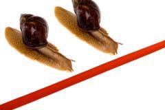 biegowy ślimaczek Fotografia Stock