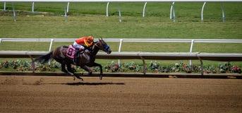 Biegowy koń, Del Mącący, Kalifornia Zdjęcia Royalty Free