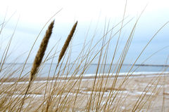 Biegungen auf dem Seehintergrund Lizenzfreie Stockfotografie