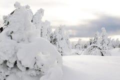 biegunowy lasowy duch Zdjęcia Stock