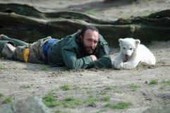 biegunowy niedźwiadkowy Knut Fotografia Stock