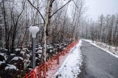 Biei蓝色池塘的冬天森林 免版税库存照片