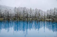 Biei蓝色池塘,北海道,日本 免版税图库摄影
