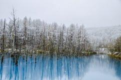 Biei蓝色池塘,北海道,日本 库存照片
