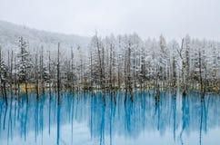 Biei蓝色池塘,北海道,日本 免版税库存照片