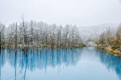 Biei蓝色池塘,北海道,日本 库存图片