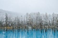 Biei蓝色池塘,北海道,日本 免版税库存图片