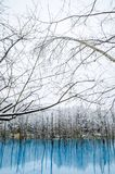 Biei蓝色池塘,北海道,日本 图库摄影