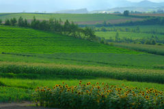 Biei. Is one of the major tourist attractions in Hokkaido, Japan.  It is famous for many hills and fields Stock Images
