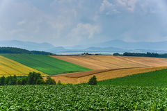 BIei agriculture area Royalty Free Stock Photos
