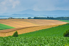 BIei agriculture area Royalty Free Stock Images
