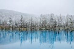 Biei Błękitny staw, hokkaido, Japonia obrazy stock