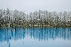 Biei Błękitny staw, hokkaido, Japonia zdjęcia stock