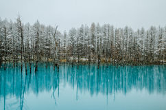 Biei Blue Pond Stock Image