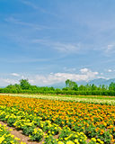 Biei and Furano flower fields, Hokkaido, Japan Stock Photography