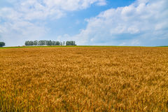 Biei mild seven and wheat field Royalty Free Stock Photo