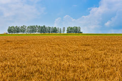 Biei mild seven and wheat field Royalty Free Stock Images