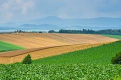 BIei rolnictwa teren obrazy royalty free